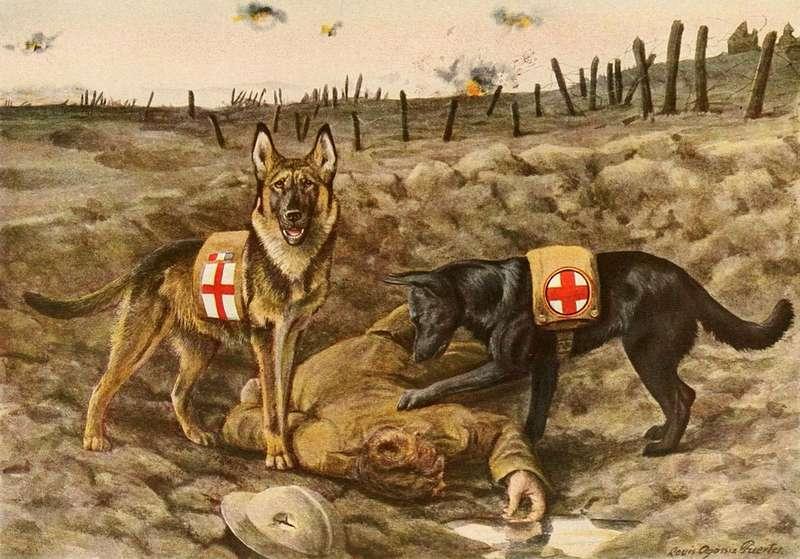 Soldati a 4 zampe