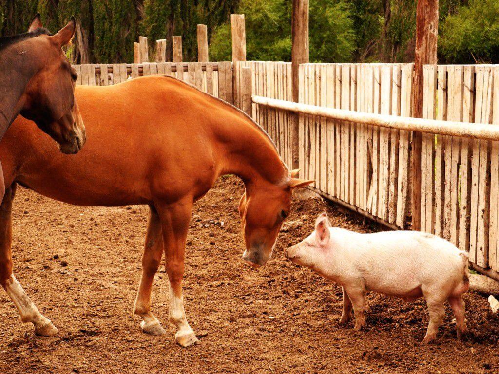 L'epoca delle spie, il maiale ed il cavallo